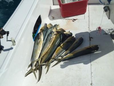 рыбалка в доминикане июле