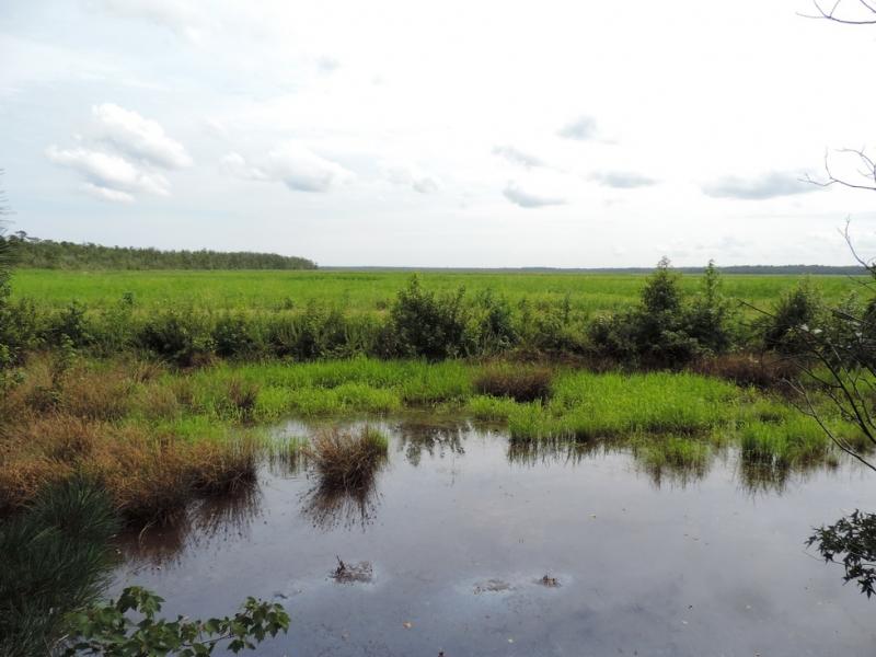 Побережье Северной Каролины Outer banks (автомобиль)