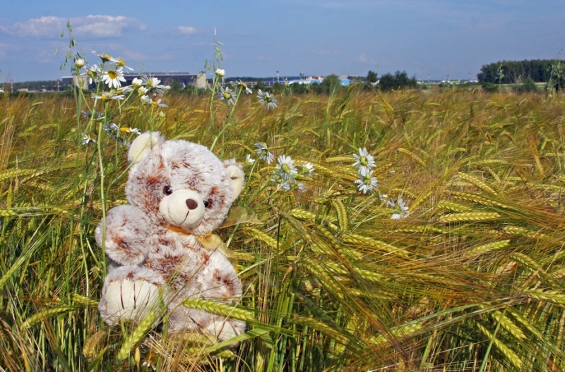 Путешествующие медведи Форума Винского