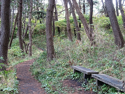 Япония, октябрь 2008. На север за красными листьями кленов. (Трафик!)