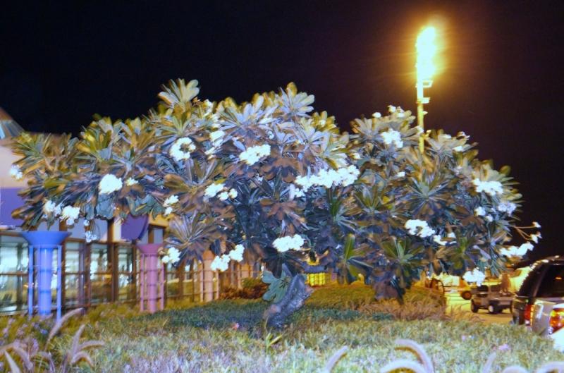Перворазники на Карибах: круиз на P&O Ventura