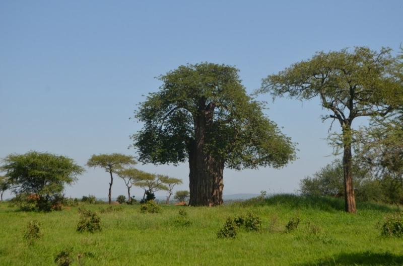 Танзания-Занзибар, январь 2015