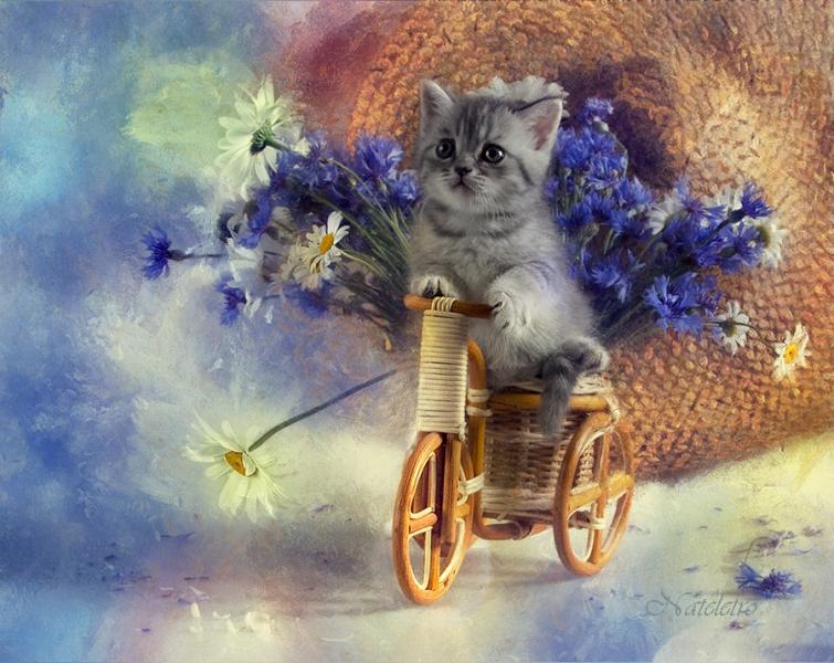 Попугаи картинки, картинки с днем рождения коты и цветы