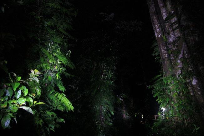 Борнео, Национальный парк Мулу