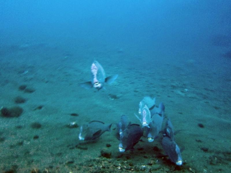 Мир под водой в фотографиях