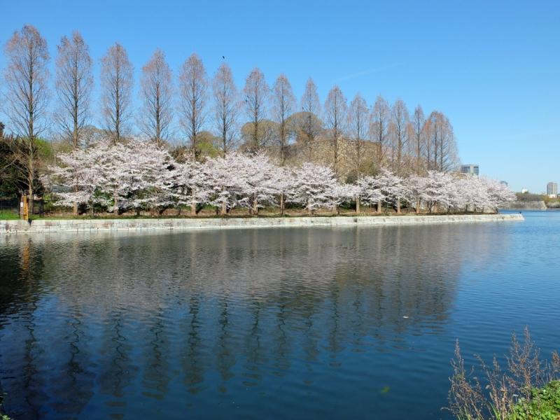 Сакура: от ханами до татами