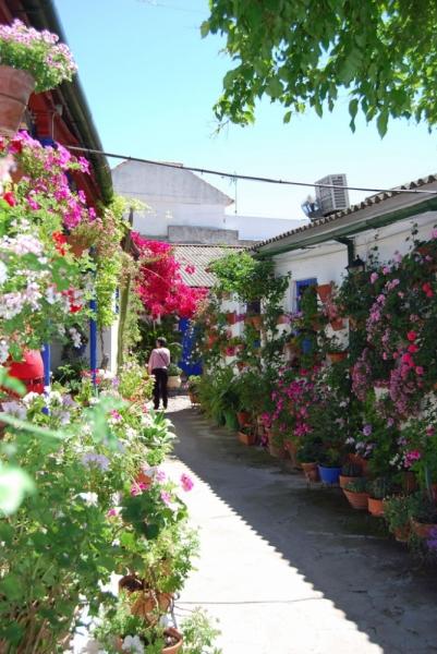 Кордова в дни фестиваля патиос: цветущая, монументальная и гастрономическая