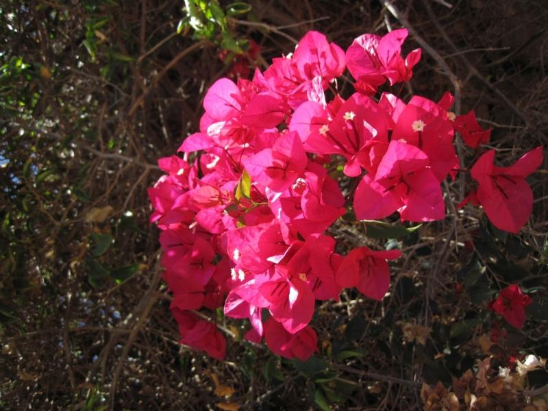 Прорваться на Лансароте (Майские праздники 2015)
