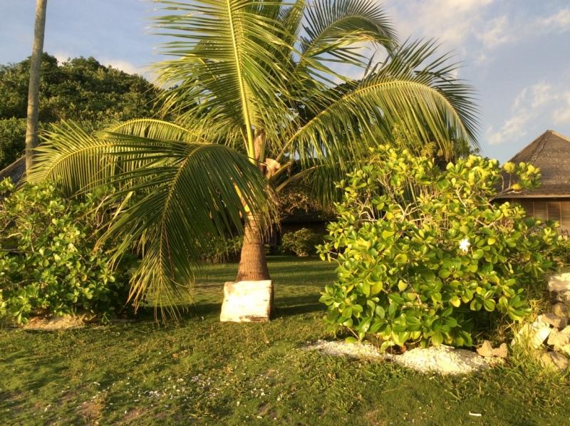 Французская Полинезия январь 2015