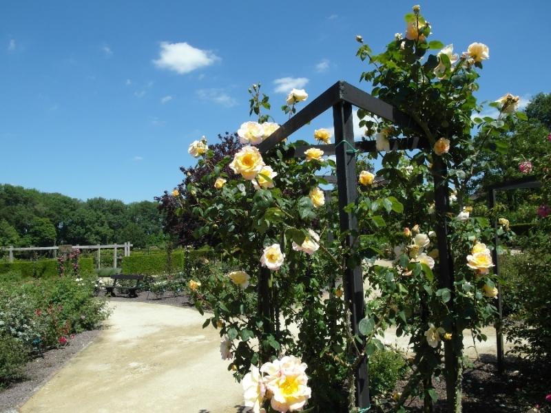 Моя Бельгия: Подорожник для души - реки, розы, гроты, грезы (Левен, Льеж, Намюр, Брюгге)