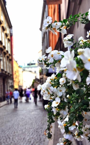 Привет, Стокгольм!