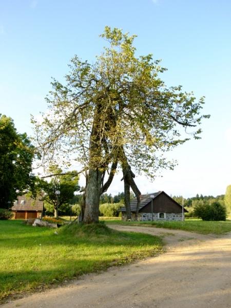 Гостевые дома. Латвия.