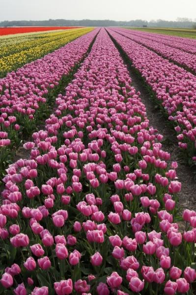 Нидерланды (Keukenhof, Rotterdam, Amsterdam, Delft, Den Haag и еще) + Бавария май 2015