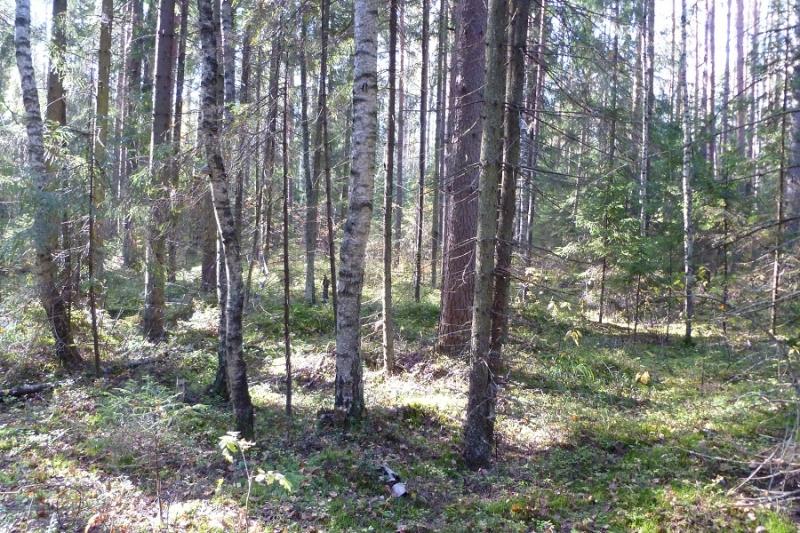 Грибалка в Московской области или Как выжить в кризис