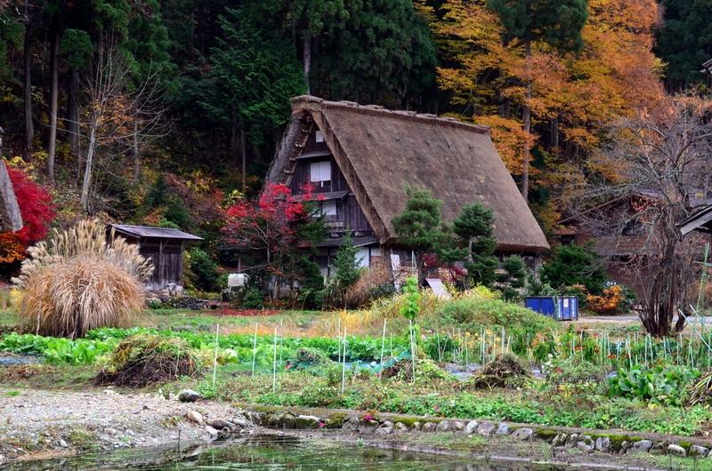 Япония. Ноябрь. Момидзи
