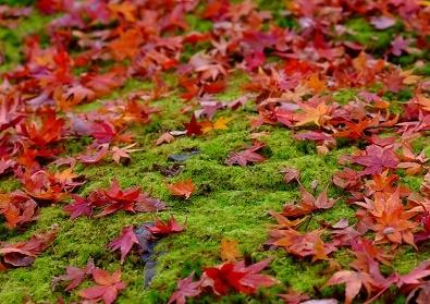 Япония: Сезон красных листьев 2015 Tokyo-Nagoya(Obara,Korankei)-Kyoto-Nara-Osaka-Kamakura
