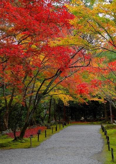 Лучшие достопримечательности Японии в сезон момидзи 2015 Tokyo-Nagoya(Obara,Korankei)-Kyoto-Nara-Osaka