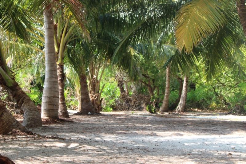 Медовый месяц в Holiday Cottage, Thoddoo Island