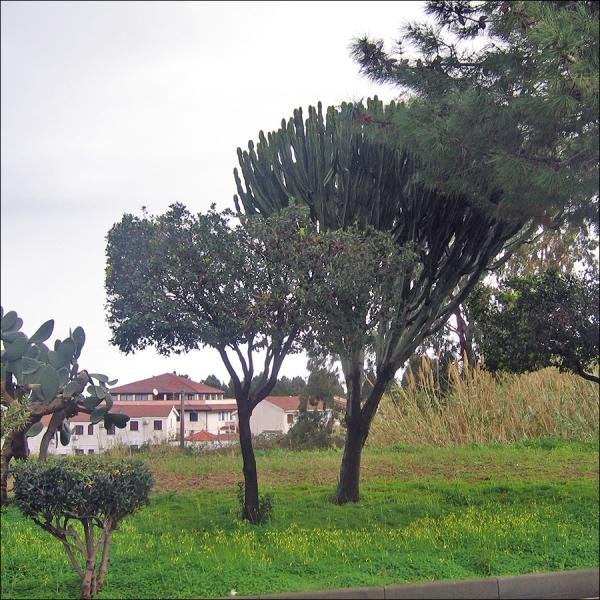Флора Средиземноморья, фото растений и цветов Италии