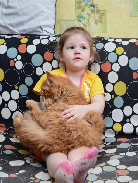 Кошки в нашей жизни. Кошки и все, что с ними связано.