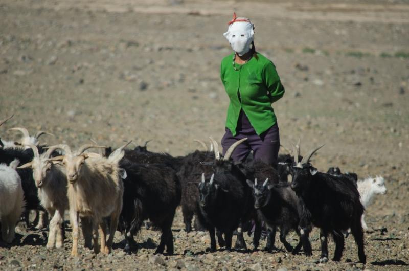 Пастух из монголии 4 буквы инвестиционные и коллекционные монеты