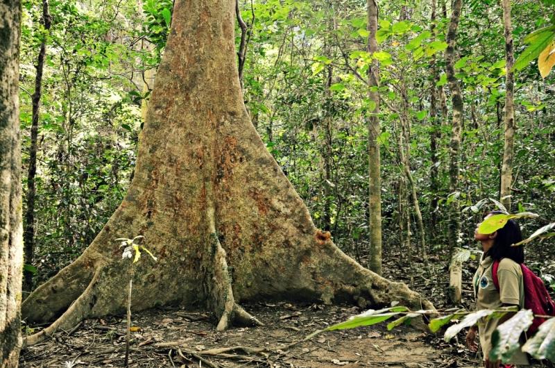 Попадая в тропический лес тебе сразу становится холодно