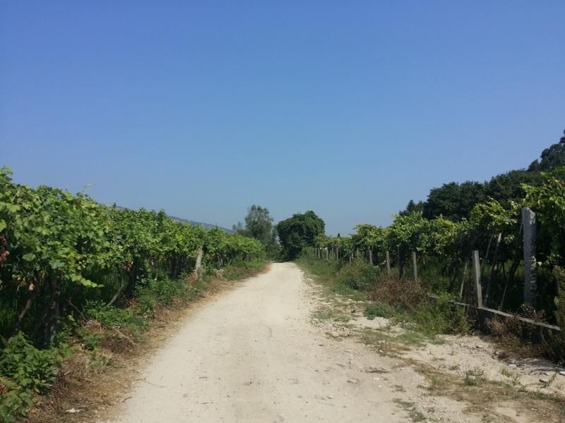 Camino de Santiago. Португальский путь - 3 в 1.