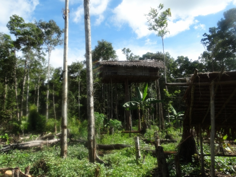 Западное Папуа - племена короваев или двадцать лет назад меня бы точно съели