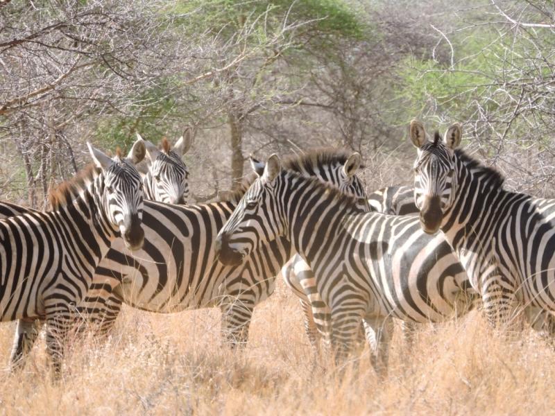 Кения на Тойоте Рав 4