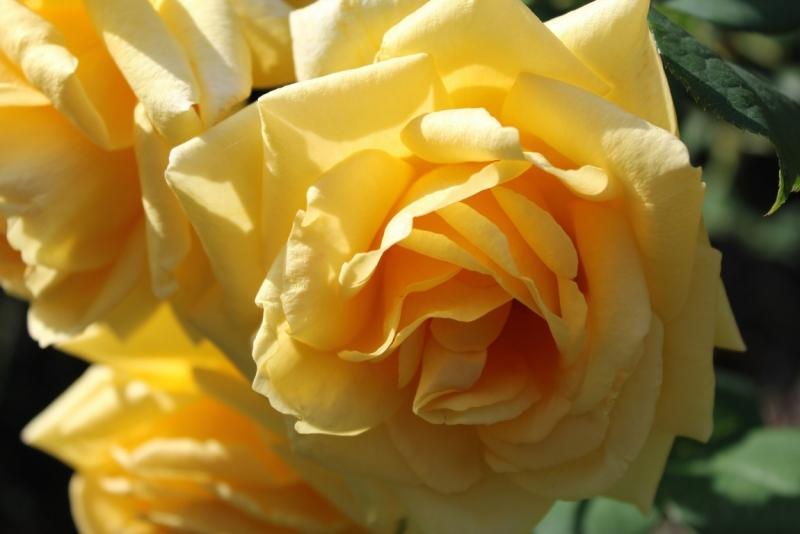 Мраморные розы Октябрьск памятник с крестом Зорге