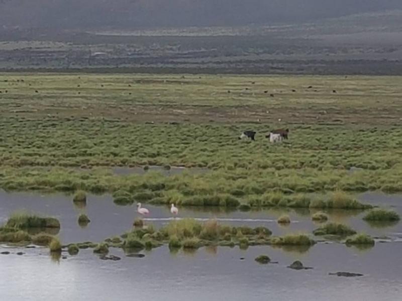 Север Чили на посмотреть. Три дня в Икике + Альтиплано и Атакама