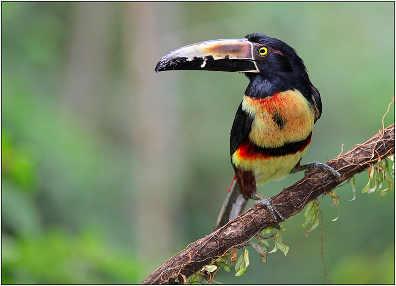 Коста-Рика: в поисках животных между двумя океанами