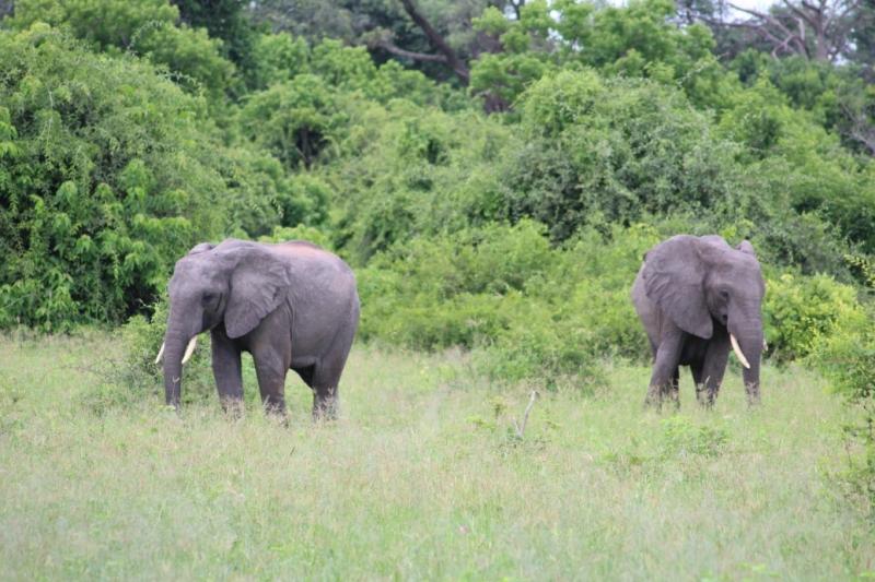 Зимбавбе, Ботсвана, Намибия - три вместо одной