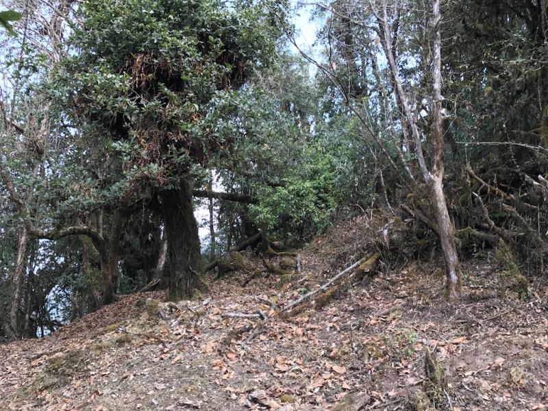 Аннапурна: Mardi Himal, ABC, Khopra. От гурунгов к пунам. Февраль-март 2017
