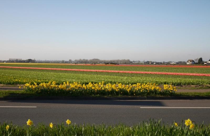 Цветочные поля и Bloemencorso 2017