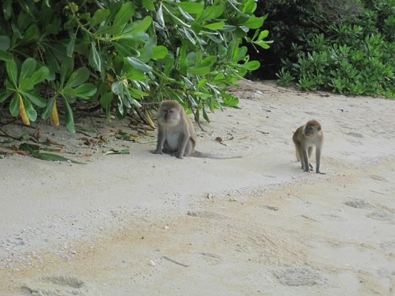 Пляжи Борнео/Лангкави