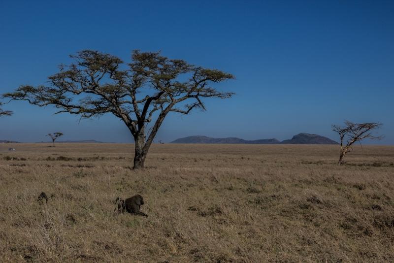 Танзания. Сафари. Декабрь 2016.