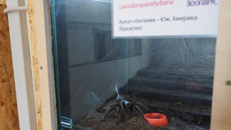 Зоопарк Ростова-на-Дону.