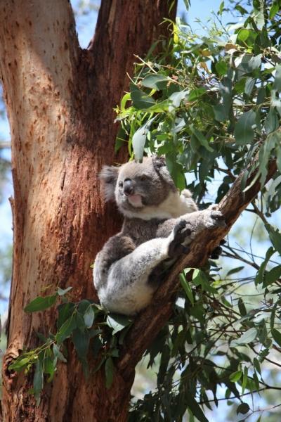 Расскажи мне про Австралию... VIC, TAS, NSW, ACT 02/17