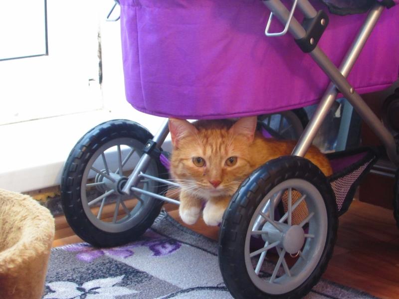 Поговорим о кошках43