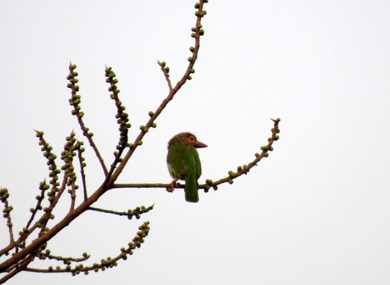 От Сагарматхи до Бардии (март-апрель 2017). О птичках и не только