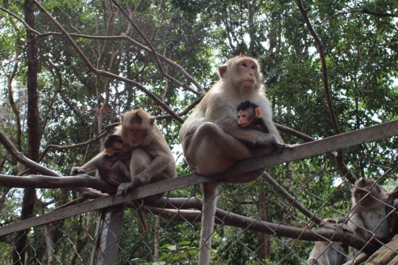 Камбоджа. Кох Ронг. Дайвинг