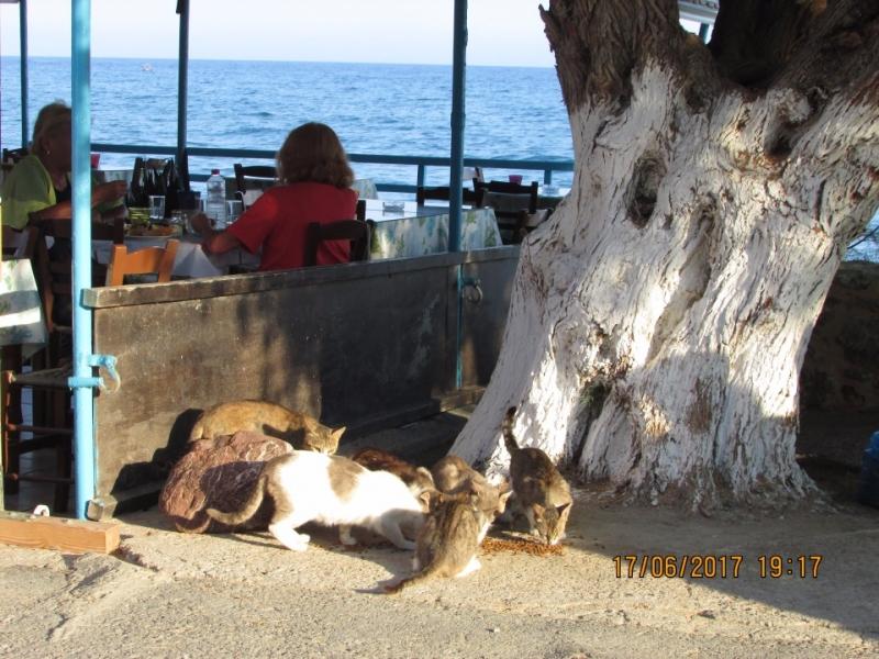 Два дня на Крите или Под знаком летающих котов