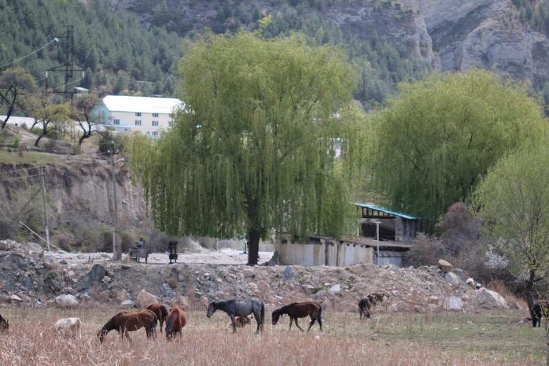Дикарём в горы Дагестана !