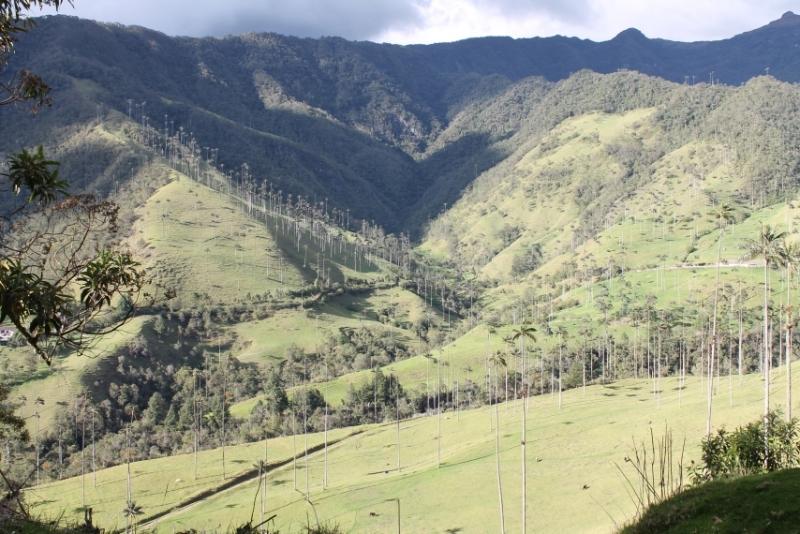 Колумбия-2016, к югу от столицы. Кофе, пальмы, истуканы...