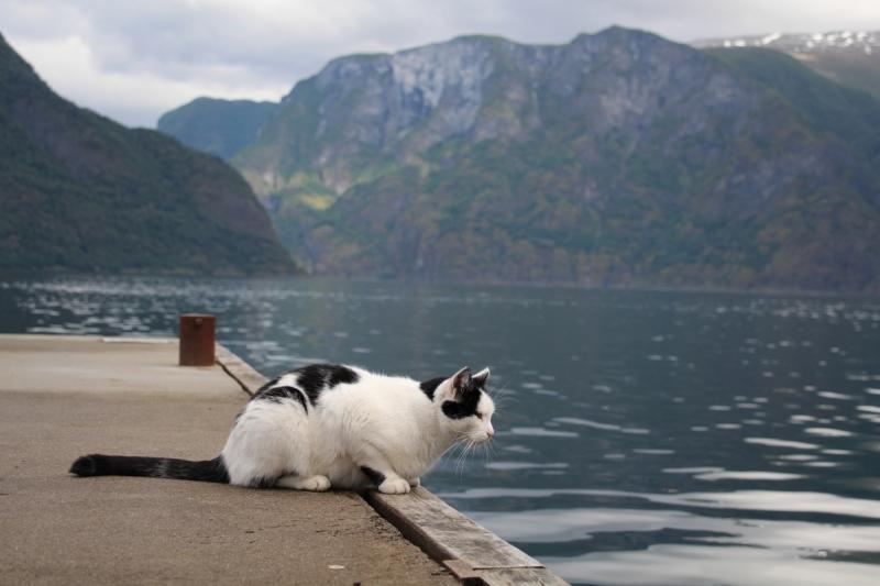 Четверо в лодке, не считая кота