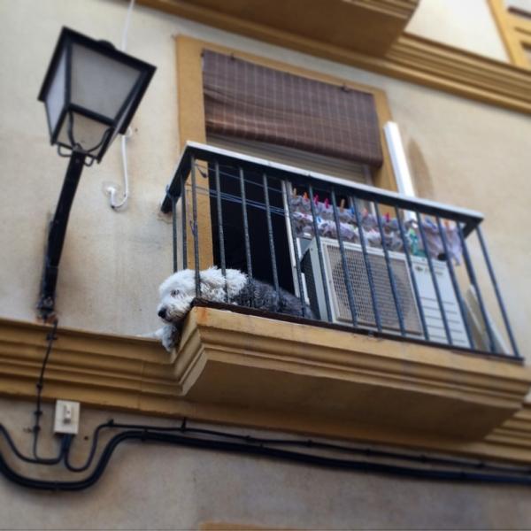 Если достала Барселона и Гауди!! есть Малага Тарифа Кадис Севилья и Гибралтар!!