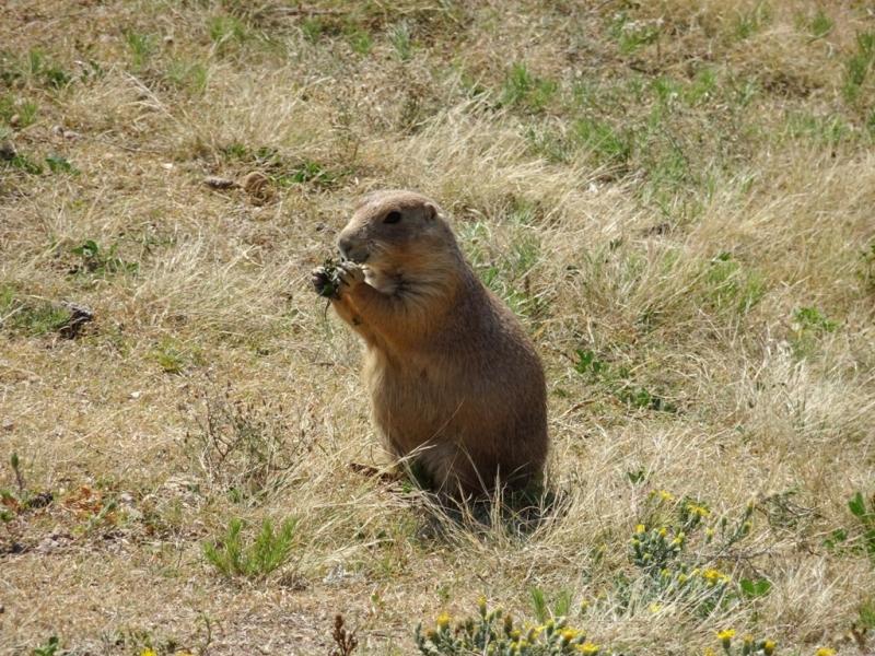 Фотографии животного мира