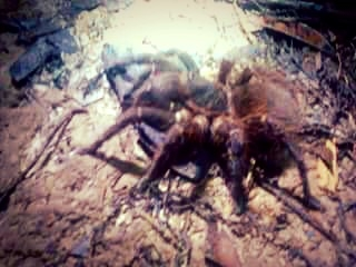 Побег на Амазонку или как я съела ленивца