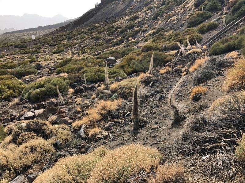 Андалусия и Тенерифе за 14 дней и 1942 км